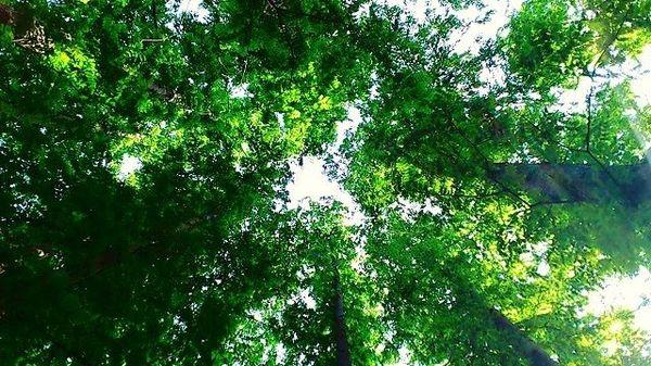 森林から先端材料を作る、世界が認めた日本の実力