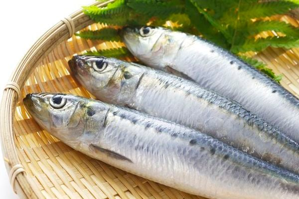 日本の缶詰第一号、イワシは謎に満ちた魚だった