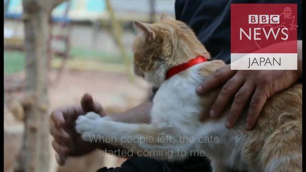 ネコ100匹と内戦生き延び シリア・アレッポの男性