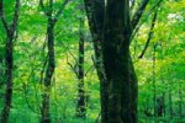 森林資源の消費量が如実に示す世界の構造変化