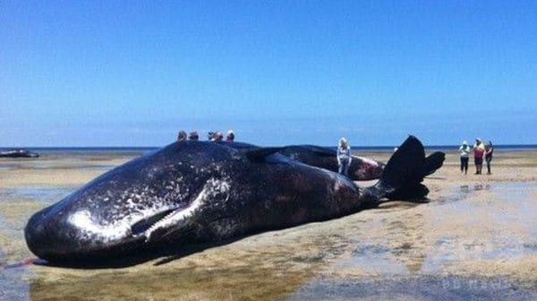 死んだクジラの胃袋を満たしていたもの