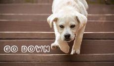 #107: go downの用法(ボキャビル・カレッジ・第107回)