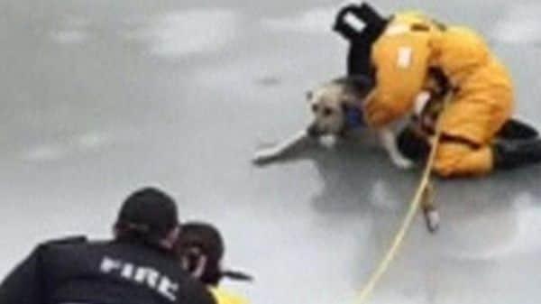 散歩中につい氷の上に……カナダで犬を救助