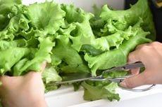 話題のスマート農業が家庭でも。IoTで野菜を自家栽培