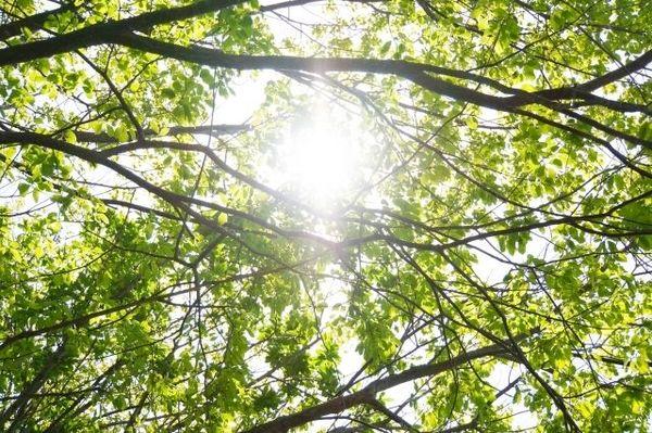 植物を作り変える人類を待っていた落とし穴とは?
