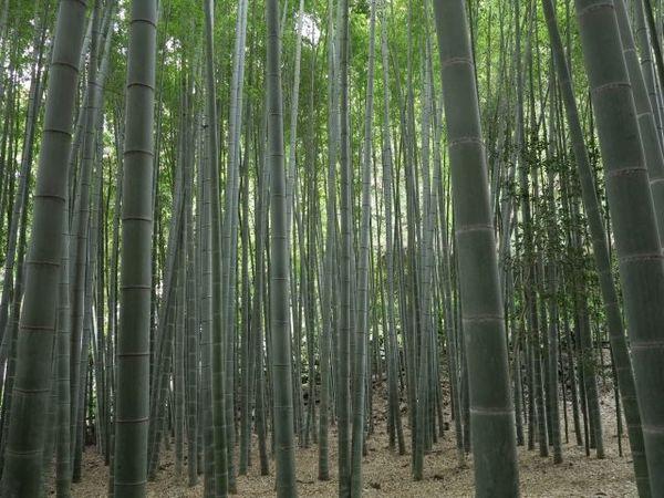 「応仁の乱」よりも前から鎌倉は戦国時代だった