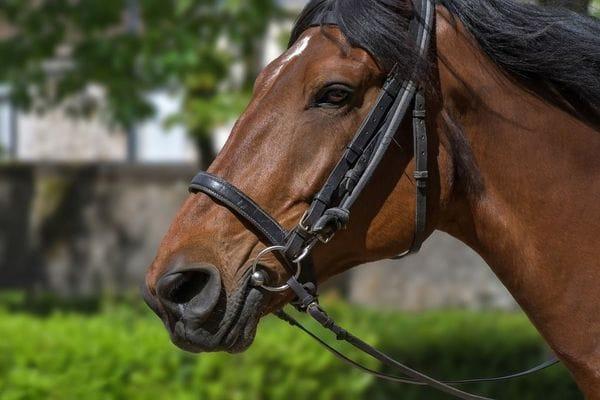 皇居内に存在した「パレス乗馬倶楽部」という奇跡