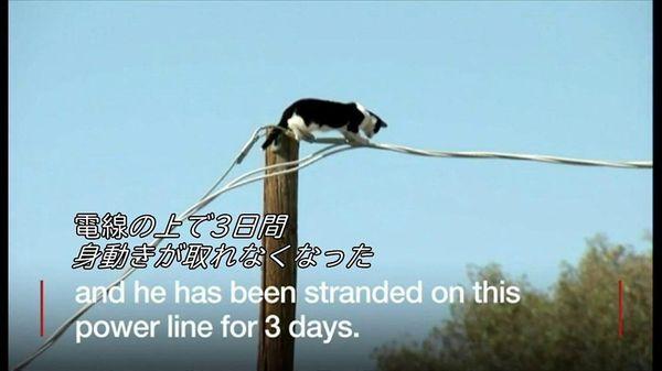 猫が電線の上で3日間立ち往生 米アリゾナ州