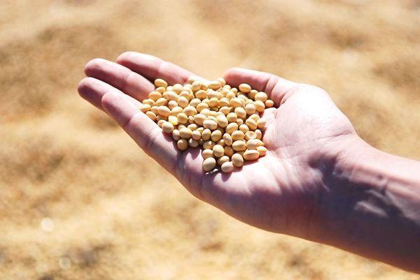 中国が抱える意外な弱み「食料自給率の低下」
