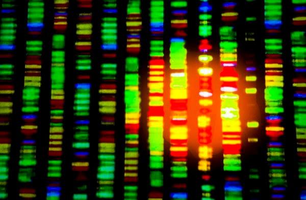ゲノム編集は遺伝子組換えか? 世界的な争点に