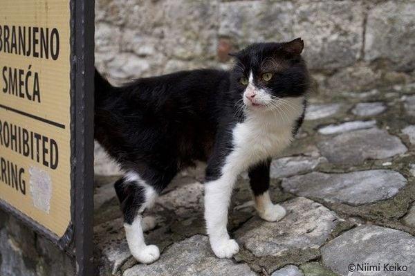 「黒い山の黒猫」と町を救った猫伝説