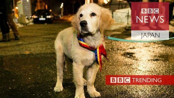 ルーマニアでは犬が反政府集会の主役 「偽ニュース」きっかけで