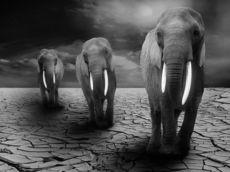 理性の限界と格闘した天才たち