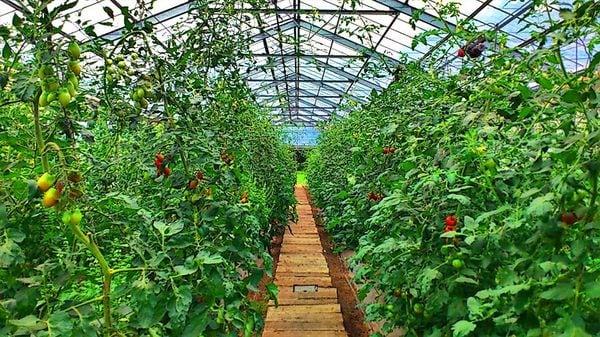 JA全農に必要なのは株式会社化よりもプロの経営者を連れてくること