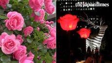 Rose Week 2018 at Tokyo Garden Terrace Kioicho