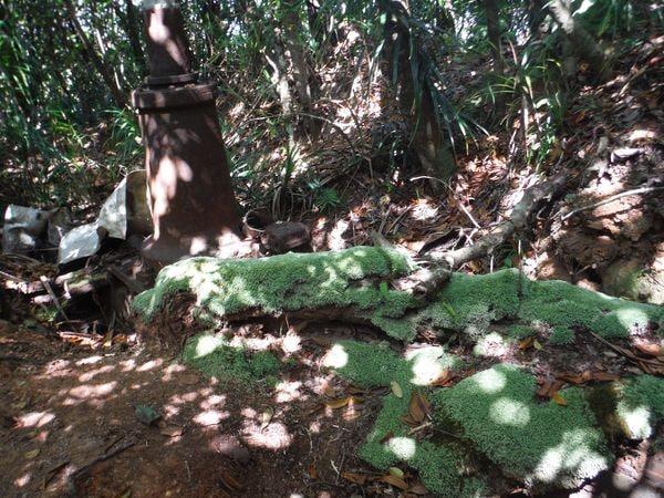 あかぽっぽに遭遇!小笠原の「不思議な森」