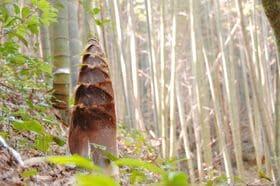 """森林の""""厄介者""""が生み出した新たな食材ビジネス"""