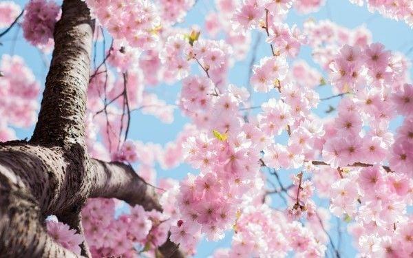 """不味いラーメンを思い起こさせる""""春""""という季節"""