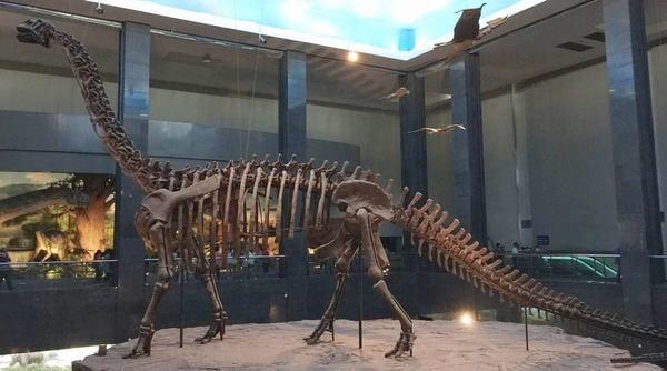 世紀の大発見を成し遂げた中国の恐竜ヲタ博士