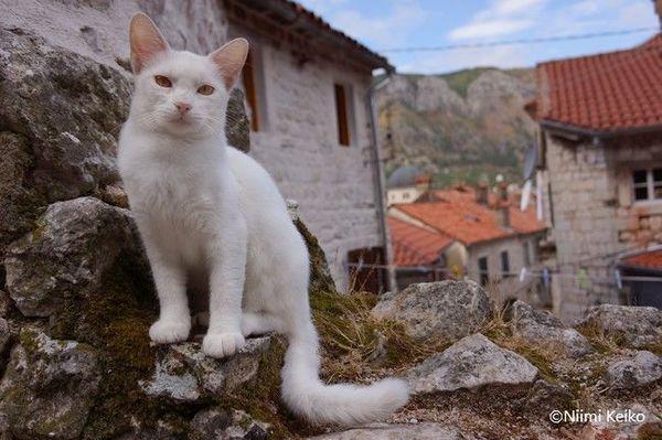 世界遺産でのロケ、猫も映画のエキストラ?