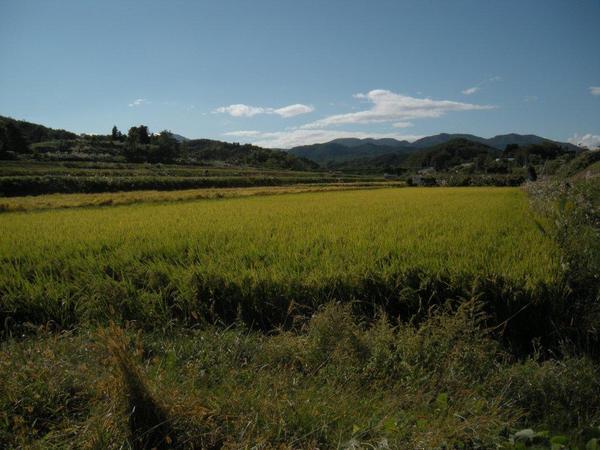 「哀れな被災者のままではいられない!」福島で農業を続けることを選んだ米農家の8代目(前篇)