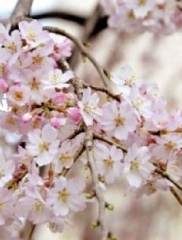 イベント集客術は「お花見」に学べ