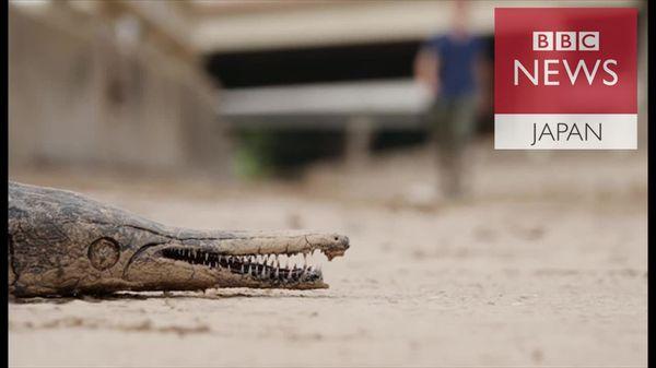 路上に大きな淡水魚……洪水がヒューストンに残したもの