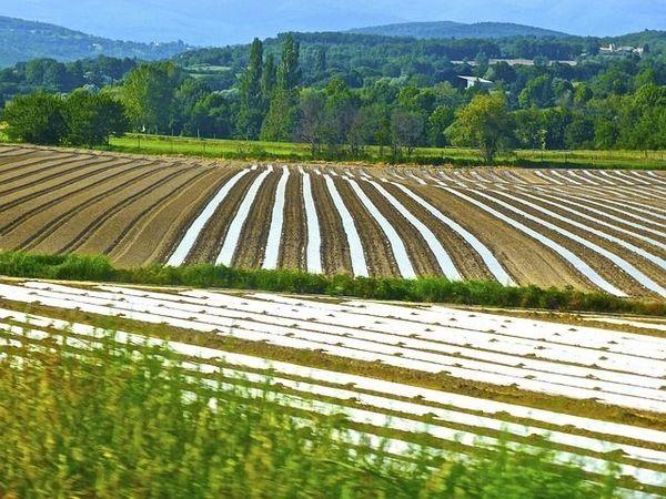農業の大規模化で耕作放棄地が増えてしまう理由