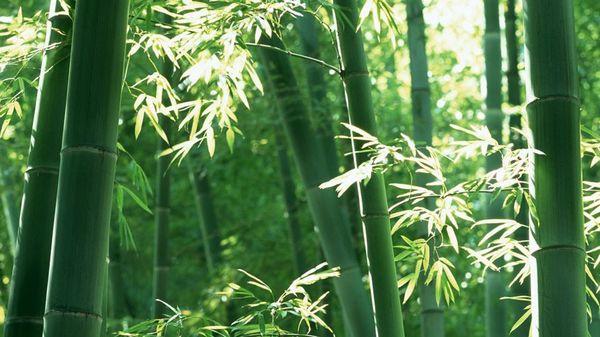 原発、消費者金融、パチンコ・・・依存者を食い物にしてきた日本の「グル」の構造